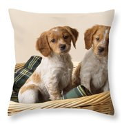 Brittany Dog Puppies In Basket Throw Pillow