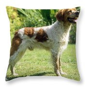 Brittany Dog, Standing Side Throw Pillow