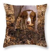 Brittany Spaniel Pixel's Pointed Woodcock Throw Pillow