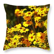 Brittle Bush In Bloom  Throw Pillow