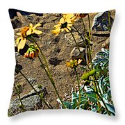 Brittlebush On Borrego Palm Canyon Trail In Anza-borrego Desert Sp-ca Throw Pillow