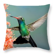 Broad-billed Hummingbird At Ocotillo Throw Pillow
