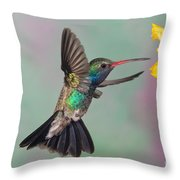 Broad-billed Hummingbird Throw Pillow by Jim Zipp