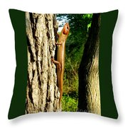Broad Headed Skink Throw Pillow