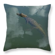 Broad-snouted Caiman Floating South Throw Pillow