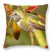 Broad Tailed Hummingbird Throw Pillow