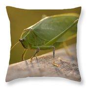 Broad-winged Katydid Throw Pillow