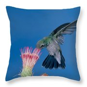 Broadbill Hummingbird Feeding At Flower Throw Pillow