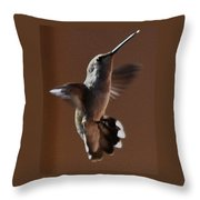 Broadtail Female Anna In Flight  Throw Pillow