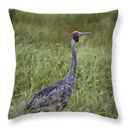 Brolga  Throw Pillow