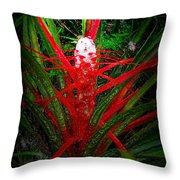 Bromelia Balansae Throw Pillow