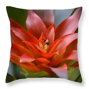 Bromeliad I Throw Pillow