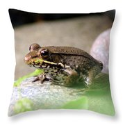 Bronze Frog Throw Pillow