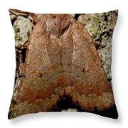 Bronze Moth Throw Pillow
