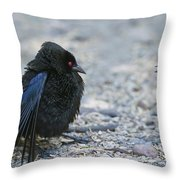 Bronzed Cowbird Display Throw Pillow