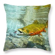 Brook Trout And Artificial Fly Throw Pillow