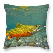 Brook Trout And Coachman Wet Fly Throw Pillow