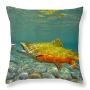Brook Trout And Royal Coachman Throw Pillow