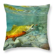Brookie With Wet Fly Throw Pillow