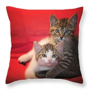 Brothers Kittens Throw Pillow