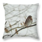 Brown And White Speckled Bird On Snowy Limb Throw Pillow