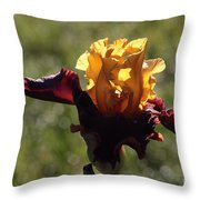Brown And Yellow Iris Throw Pillow