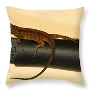 Brown Anole On Pipe Throw Pillow