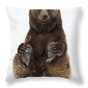 Brown Bear Holding Its Paws Germany Throw Pillow