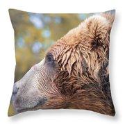 Brown Bear Portrait In Autumn Throw Pillow