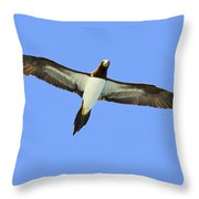 Brown Booby Throw Pillow