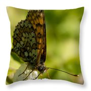Brown Butterfly Throw Pillow