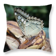 Brown Clipper Butterfly #3 Throw Pillow