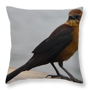 Brown Cowbird Throw Pillow