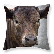 Brown Eyed Boy - Calf Portrait Throw Pillow