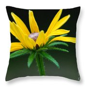 Brown-eyed Susan Throw Pillow
