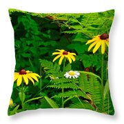 Brown-eyed Susans Along Rivier Du Nord Trail In The Laurentians-quebec Throw Pillow