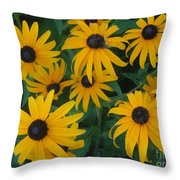 Brown Eyed Susans Throw Pillow