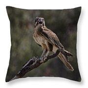 Brown Falcon V2 Throw Pillow