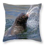 Brown Fur Seal Throwing A Fish Head Throw Pillow