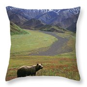 Brown Grizzly Bear In Denali National Throw Pillow