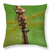 Brown Hawker Dragonfly Switzerland Throw Pillow