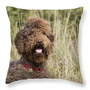 Brown Labradoodle In Field Throw Pillow