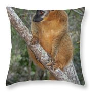 brown Maki Madagascar 1 Throw Pillow