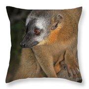 brown Maki Madagascar 2 Throw Pillow
