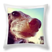 Brown Noser Throw Pillow