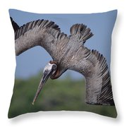 Brown Pelican Diving Academy Bay Throw Pillow