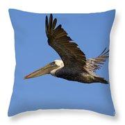 Brown Pelican Flight Throw Pillow
