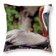 Brown Pelican Incubating Eggs Throw Pillow