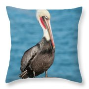 Brown Pelican Pelecanus Occidentalis Throw Pillow