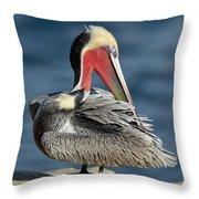 Brown Pelican Preening Throw Pillow